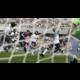 FIFA 14 - X360