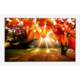 Signage a digitální fotoobrazy